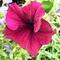 f-virágok 051