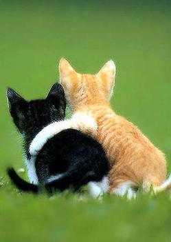 szeretik egymást