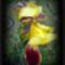 Virágaink,  nőszirom....