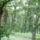 Csodálatos természet: fák