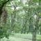 Fonyódi fák