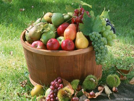 Őszi gyümölcsök dézsában