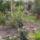 baloghgabi növényei és kertje