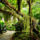 A_dzsungel_414759_85383_t