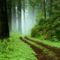 ősvény az erdőben
