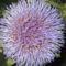 Articsóka virága