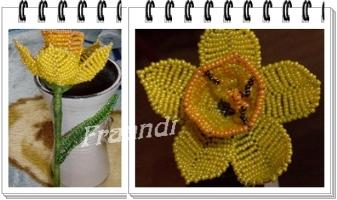 nárcisz _ első virágom