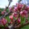 virágok001 (12)