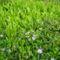 virágok001 (13)