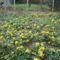 virágok001 (14)