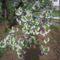 virágok001 (5)