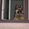 Brúnó kutyánk