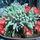 Kaktuszom_41211_878946_t