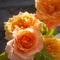Rózsánk