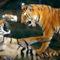 tiger simizés
