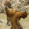 tigris harc