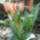 növényeim, régi kert