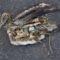 Albatrosz tetemek! Őket mi öltük meg !!! 10
