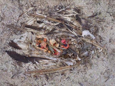 Albatrosz tetemek! Őket mi öltük meg !!! 11