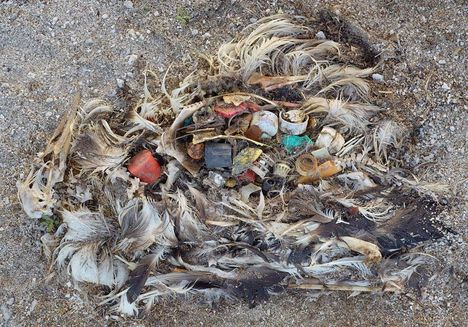 Albatrosz tetemek! Őket mi öltük meg !!! 14
