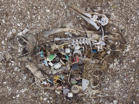 Albatrosz tetemek! Őket mi öltük meg !!! 17