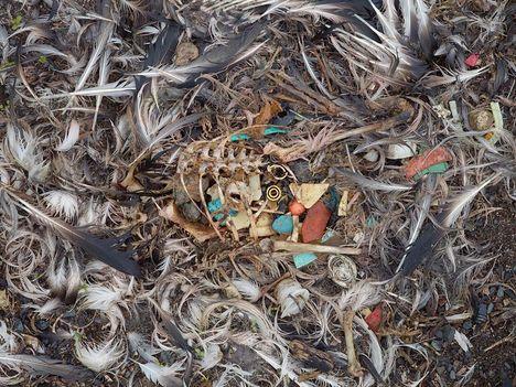 Albatrosz tetemek! Őket mi öltük meg !!! 18