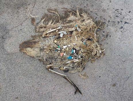 Albatrosz tetemek! Őket mi öltük meg !!! 19