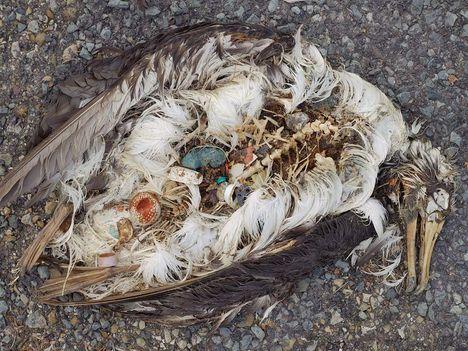 Albatrosz tetemek! Őket mi öltük meg !!! 20
