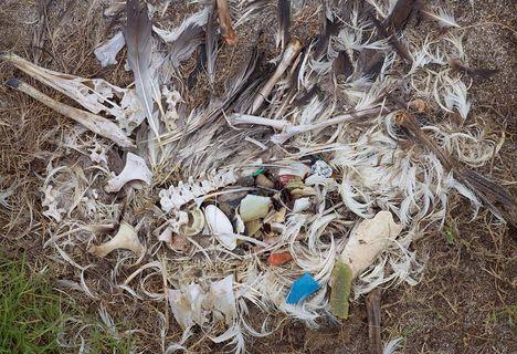 Albatrosz tetemek! Őket mi öltük meg !!! 21
