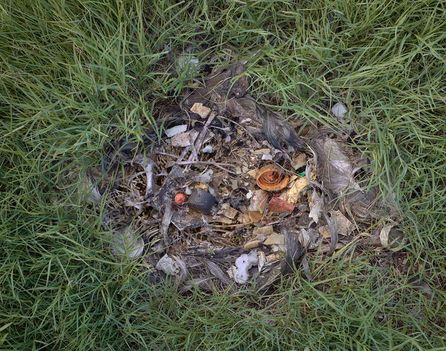 Albatrosz tetemek! Őket mi öltük meg !!! 29