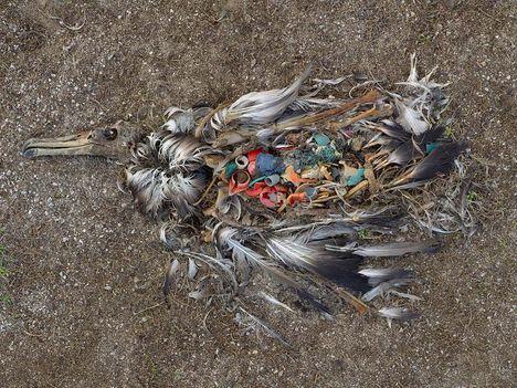 Albatrosz tetemek! Őket mi öltük meg !!! 2