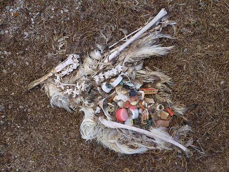 Albatrosz tetemek! Őket mi öltük meg !!! 3