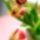 Tulipanok_423700_79147_t