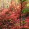 Őszi erdő a Balaton mellett