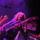 Whitesnake Tribute Band - Crazy Mama 2009 (fotók: Somfai Sándor)