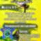 ACDP plakát 2009 okt Capoeira_by_kikajoly