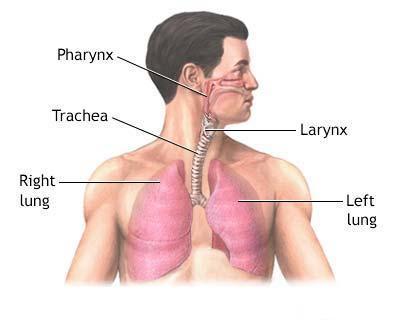 Az érintett területek: orr, légcső, torok, garat, tüdő