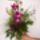 Dendrobium_420737_54281_t