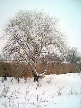Hazai nyár, télen.