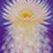 Nectar of Divine Essence