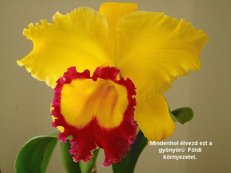 Orhidea és felvillanó gondolatok 14