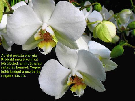 Orhidea és felvillanó gondolatok 15