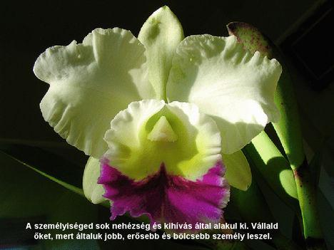 Orhidea és felvillanó gondolatok 17