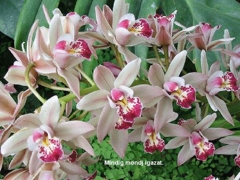 Orhidea és felvillanó gondolatok 19