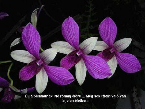 Orhidea és felvillanó gondolatok 21