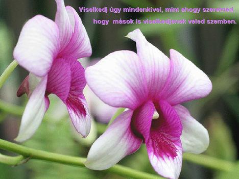 Orhidea és felvillanó gondolatok 22