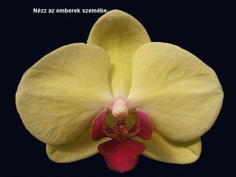 Orhidea és felvillanó gondolatok 25