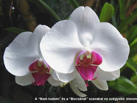 Orhidea és felvillanó gondolatok 27