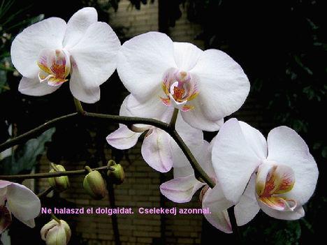 Orhidea és felvillanó gondolatok 28