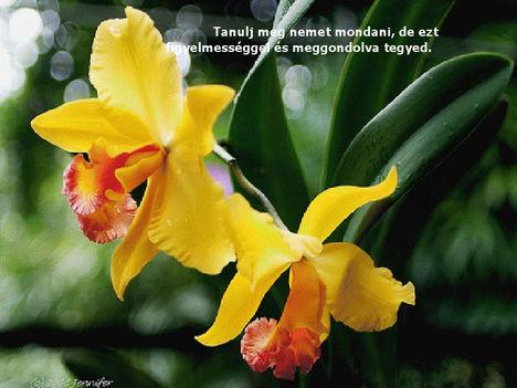 Orhidea és felvillanó gondolatok 31